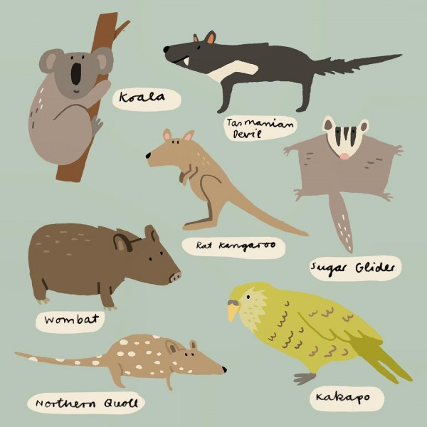 These guys from Australia australia illustration wombat sugarglider tasmaniandevil koala