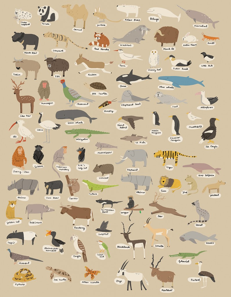 all_kinds_of_animals2